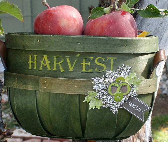 Harvest basket danni reid