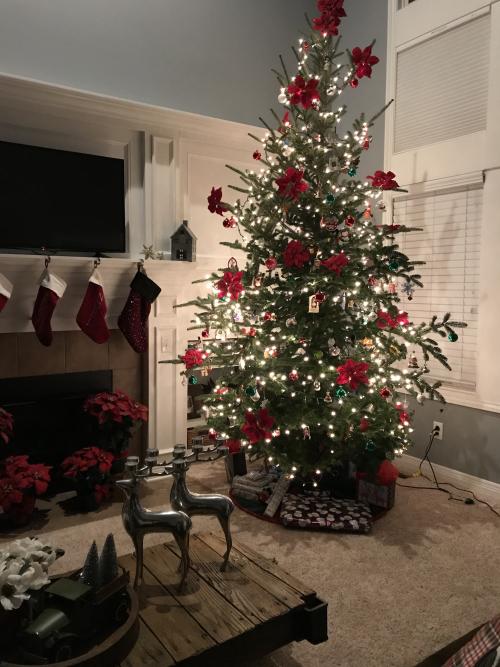 Jill's Tree