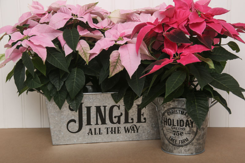Holiday home decor project using Jillibean Soup's cut file.  How to use a cut file on a home decor project.  Jilibean Soup home decor projects.  #jillibeansoup #homedecor #holiday #cutfile