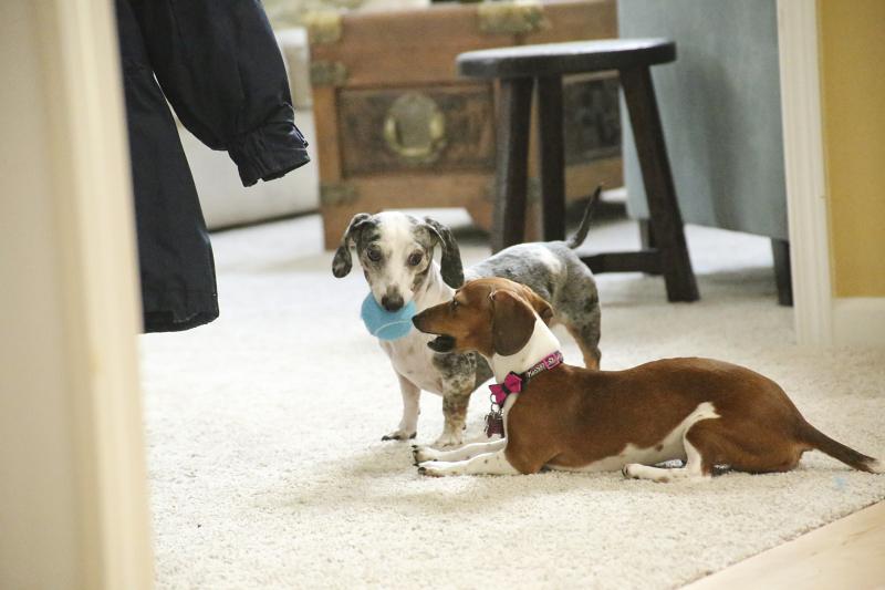 Summer Fullerton dogs
