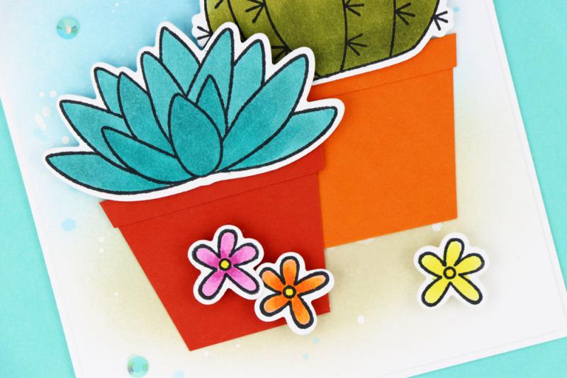 Cactus-Five