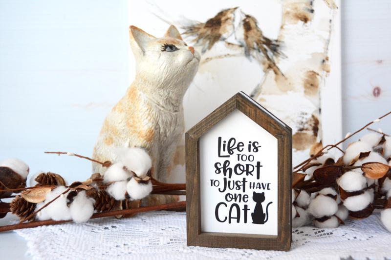Cat_MarciaDehn-Nix_1